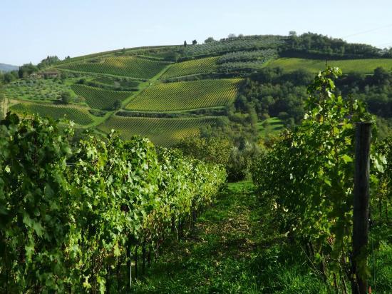 Villa Rignana: organic wine