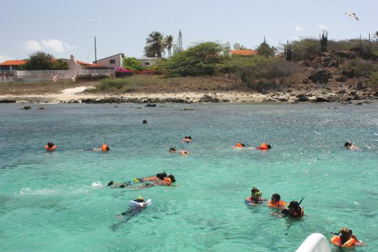 Pelican Adventures: all snorkeling