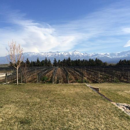 Mendoza Wine Bike Tour: View from AndeLuna Winery!