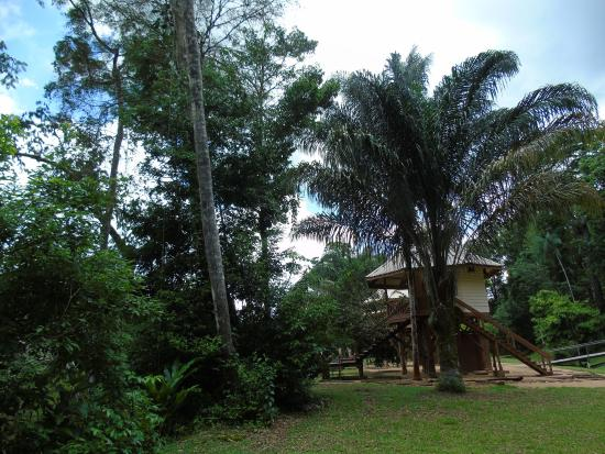 Kabalebo Nature Resort: The area around the river cabins
