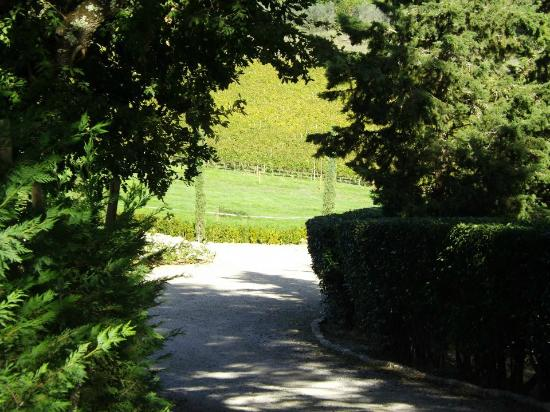 Villa Rignana: wineyards