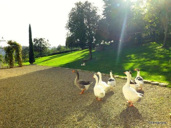 Villa Rignana: happy geese