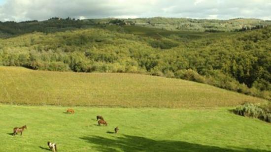 Villa Rignana: horses in our fields