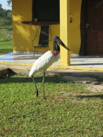 Jaguar Ecological Reserve: Our daily guest