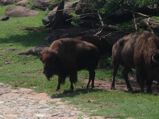 Zoofari: Increíble que los animales están tan cerca de ti