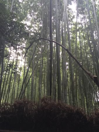 Ebisuya, Kyoto Arashiyama: A good place for relaxing your mind with nature. Green scenery of bamboos.