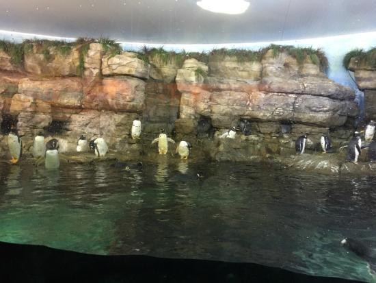 Oceanografic Valencia: Pinguini