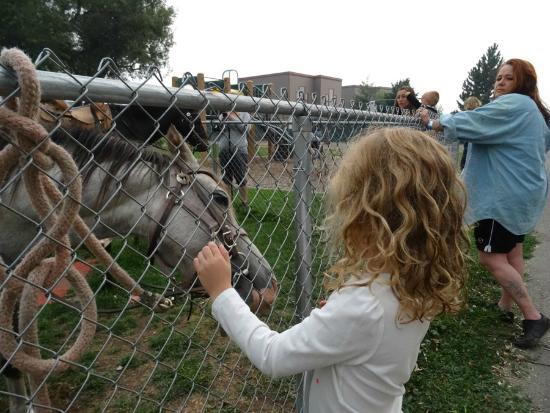 Missoula KOA: Friday night free pony rides were great!