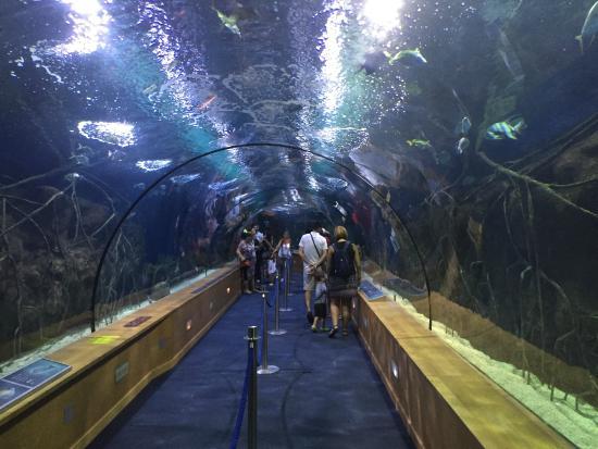 Oceanografic Valencia: Tunnel Acquario