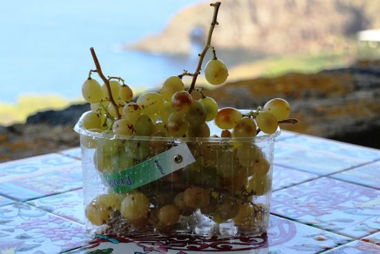 Club Levante: Uva appena raccolta
