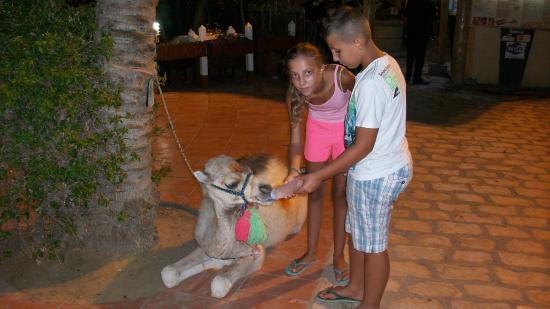 Yasmin Hammamet: l'amour des animaux