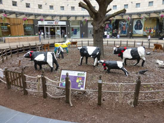 The Centre: MK: cool cows