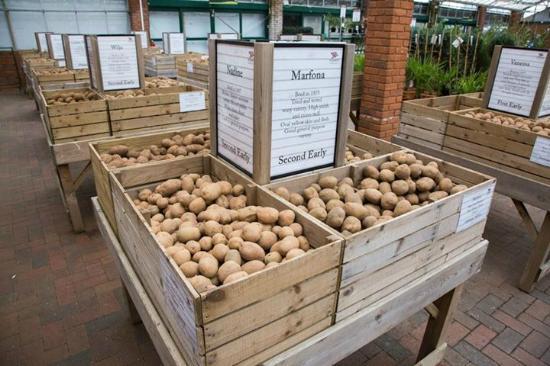 Stewarts Garden Centre: Potato area at Stewarts Christchurch