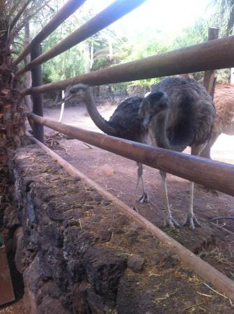 Oasis Park Fuerteventura: all animals are easy seen