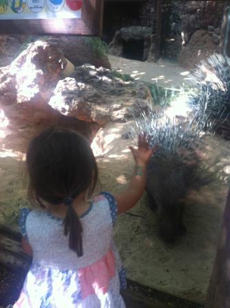 Oasis Park Fuerteventura: even small children have glass viewing area