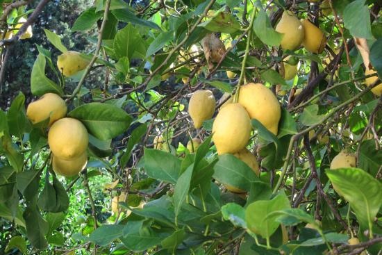 Agroturisme Finca Sa Maniga: Un aspect du verger