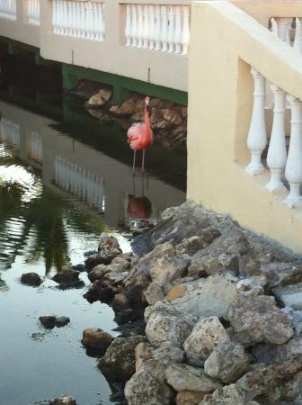 Memories Caribe Beach Resort: Notre ami Rose