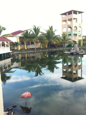 Memories Caribe Beach Resort: le centre du site
