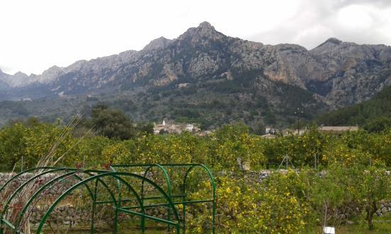 Serra de Tramuntana: Soller, puig major al fondo.