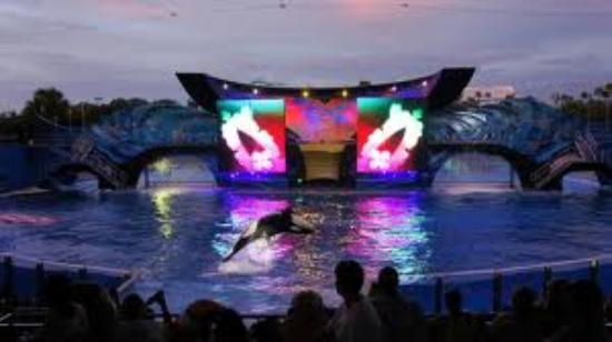 SeaWorld Orlando: super spectacle :-)