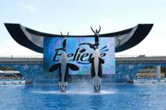 SeaWorld Orlando: un parc a faire