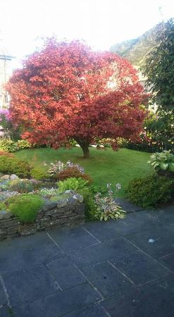 Orchard Cottage: Beautiful tree in the garden