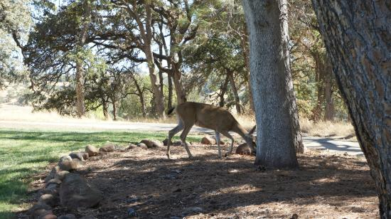 Bidwell Park Golf Course: Deers 3