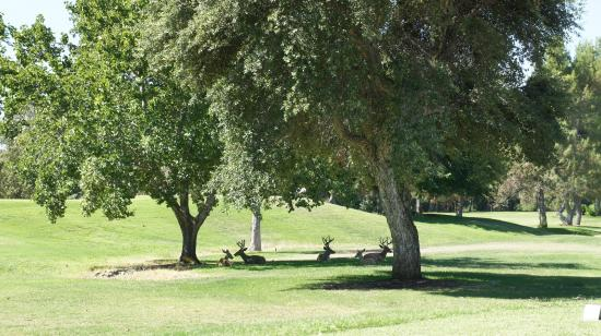 Bidwell Park Golf Course: Deers 1