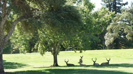Bidwell Park Golf Course: Deers 2