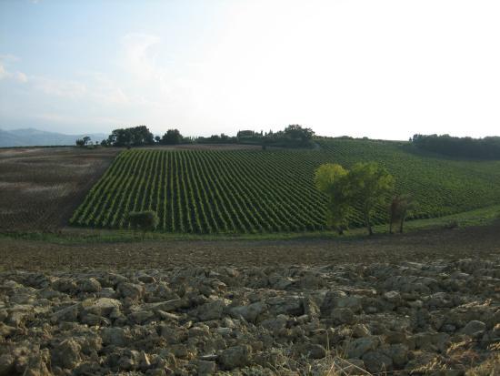 La Locanda del Picchio: Locanda del Picchio