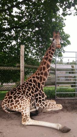 West Midland Safari Park: West Midland Safari and Leisure Park