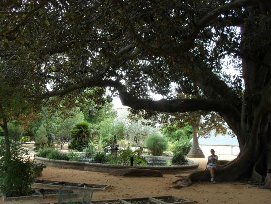 Ajuda Nasjonalpalass: Jardim Botanico da Ajuda