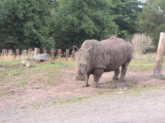 West Midland Safari and Leisure Park: Rhino