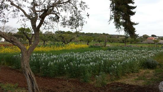 Azienda Agrituristica Perrini: Il campo davanti gli alloggi!!! Un posto immerso nel verde!!!