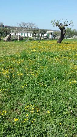 Azienda Agrituristica Perrini: Il campo davanti gli alloggi!!!