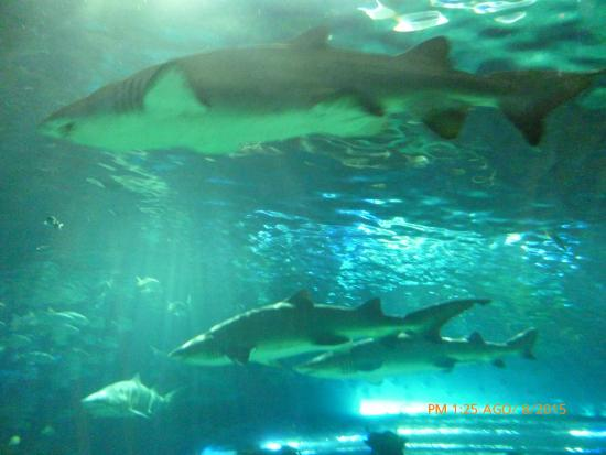 Ripley's Aquarium Of Canada: Tiburones