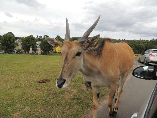 West Midland Safari and Leisure Park: It like the look of the wing mirror