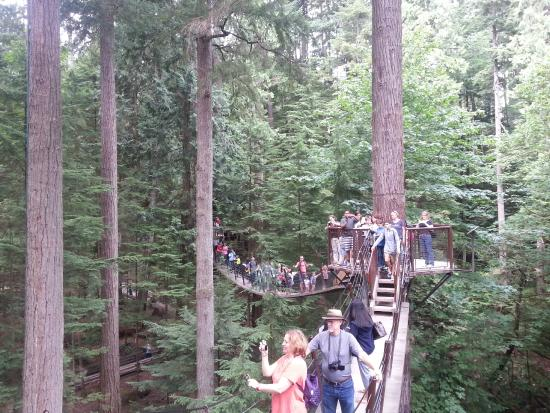 Capilano Suspension Bridge and Park: Pontes para andar por cima do parque