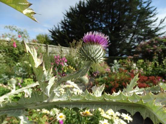 Larnach Castle & Gardens: Not quite a Scottish Thistle