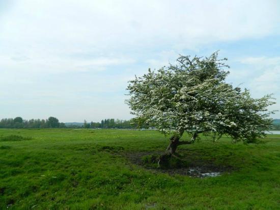 Port Meadow: Lindísimos árboles