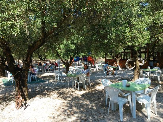 Agriturismo La Rondine: colazione nell'uliveto