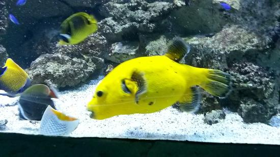 Aquarium de Lyon: poissons