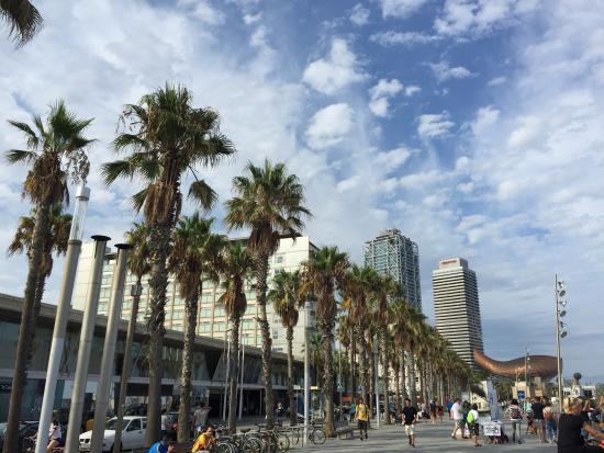 El Puerto de Barcelona: photo2.jpg