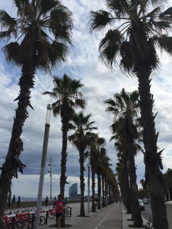 El Puerto de Barcelona: photo3.jpg