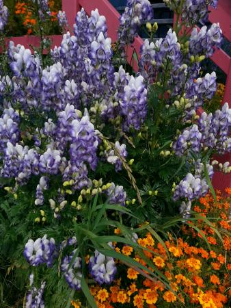 McCarthy's Party - Day Tours: Monkshood