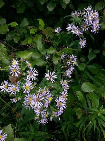 McCarthy's Party - Day Tours: Aster