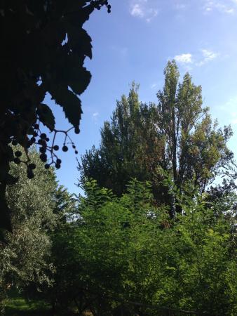 Agriturismo Il Borgo nelle Querce: Scorcio di cielo tra querce e ulivi