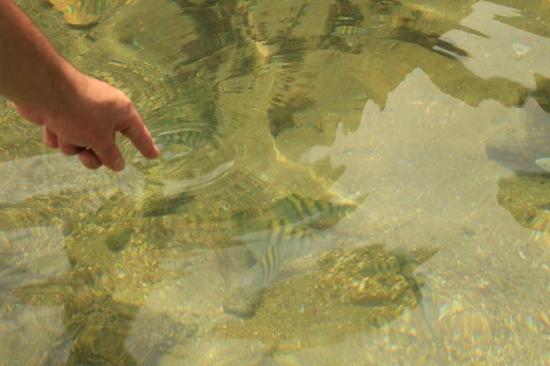 Piscina Natural da Caixa d'Aço: muitos peixinhos