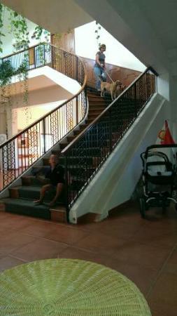 Hotel delle Stelle Beach Resort: scala senza ascensore  e cani