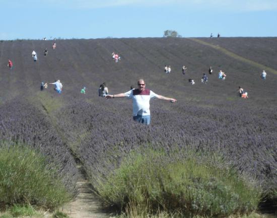 Hitchin Lavender: Lavender picking